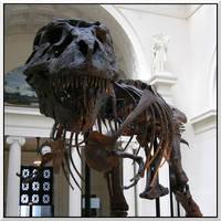 Sue the Tyrannosaurus by errorlog