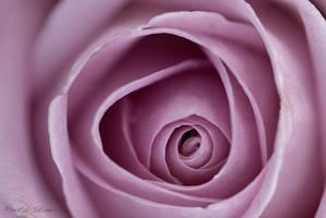 Pink beauty by StineJ
