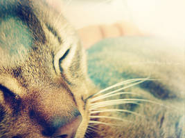 snoozle by onegreyelephant