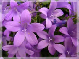 In Violet by Den-Lilla-Rose