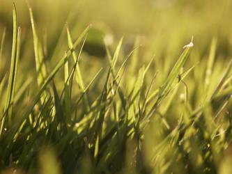 grass by HeavyHead