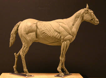 Horse Ecorche - Day 15 by aerie-