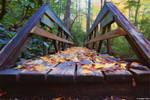An autumn forest by gustiidiaz