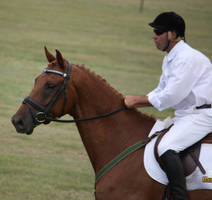 STOCK Showjumping 499 by aussiegal7