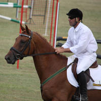 STOCK Showjumping 500 by aussiegal7