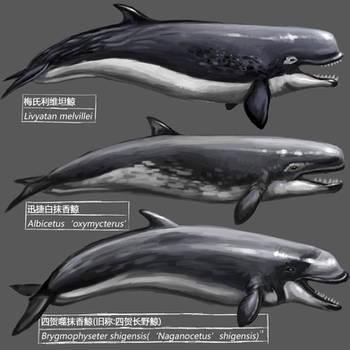 Prehistoric whale by KookaburraSurvivor