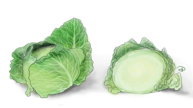 Cabbage by Dicky98