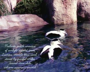Black and White Ducks by JJPoatree