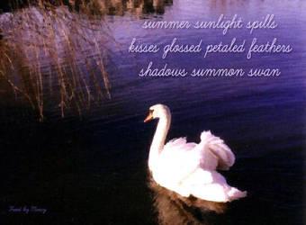 Swan Haiga by JJPoatree