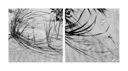 sea grass diptych by JJPoatree