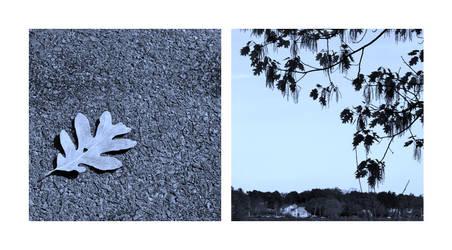Oak by JJPoatree