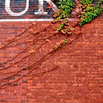 Brick and Ivy 1 square by JJPoatree