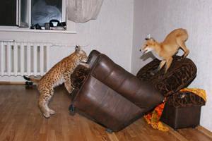 Lynx and fox 6 by foxsvir