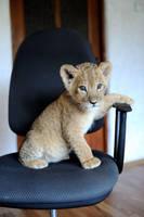 lion 2 by foxsvir