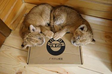 lion by foxsvir