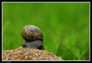 Snail with green BG by geostant