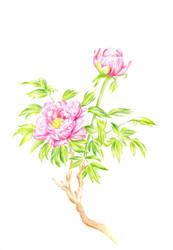 Pink flower by katialumik