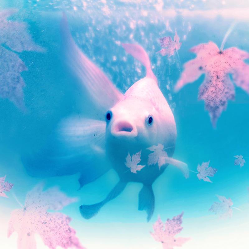 underwater autumn by KalbiCamdan