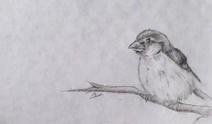 Bird by YOHONBANTA