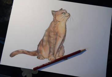 Tigerclaw by Tefassh