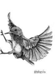 Sketch Bird 01 by julianosilveira