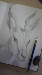 Deer - Graphite Pencil Drawing by CarolMylius