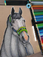 Horse portrait - gift for my loff- by Sungickala