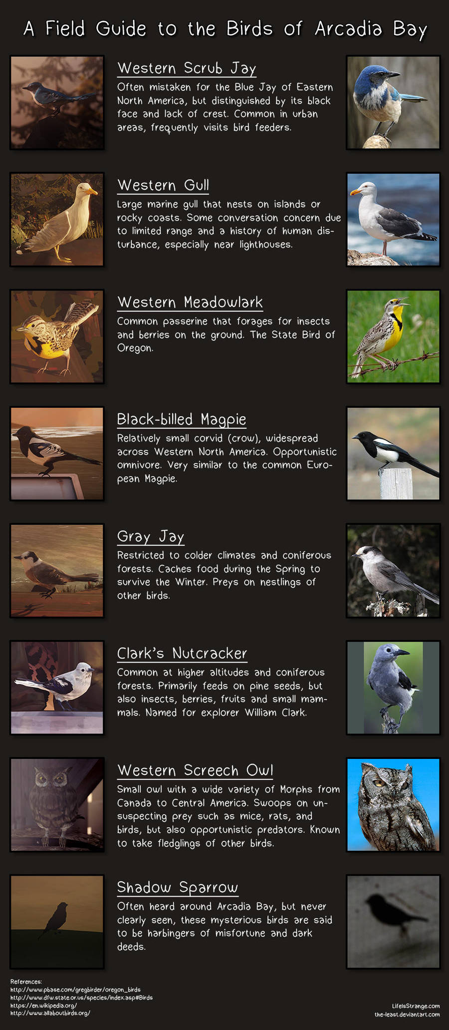 Field Guide to the Birds of Arcadia Bay by the-least