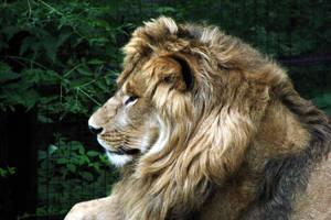Royalty Profile by asaph70