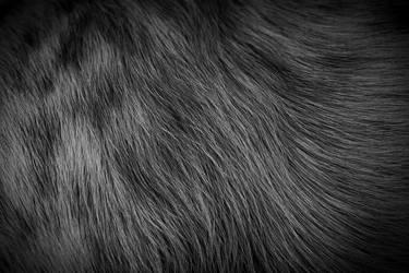 fur by asaph70