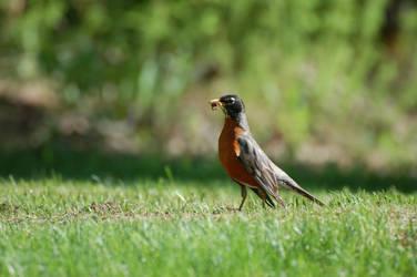Early Bird by Mistydrop