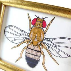 Fruit fly by WeirdBugLady