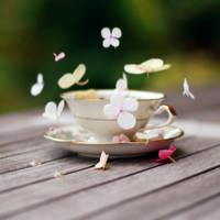 like dancing butterflies by LenaCramer