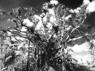 infared tree by abandonedmuse