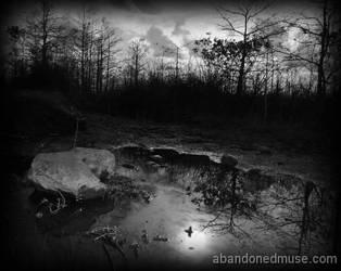 Everglades by abandonedmuse