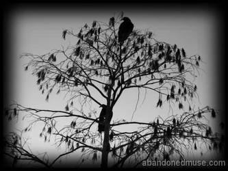 Everglades birds by abandonedmuse