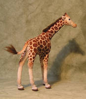 Giraffe by ellis-animals