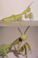 Praying mantis by ellis-animals