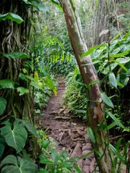 Tropical Hiking Trail by joeyartist