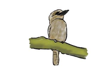 Kookaburra - Drawing by IceRazer666