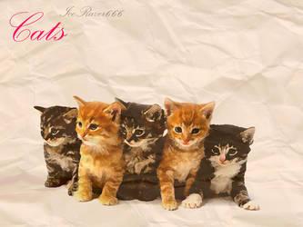 Cats by IceRazer666