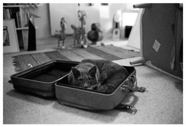 kit-cat-box by finegrain