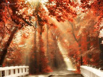 Red For Rest by LarsVanDeGoor