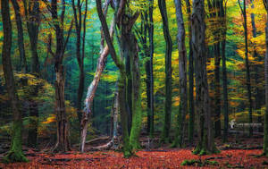 Speulder Forest by LarsVanDeGoor
