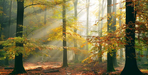Sinfonia Della Foresta by LarsVanDeGoor