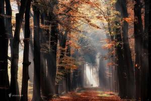 In the Spotlight by LarsVanDeGoor