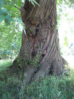 tree 5 by BlissStock