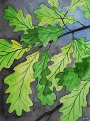 Oak leaves by GwilymG