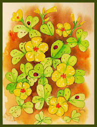 Oxalis by GwilymG