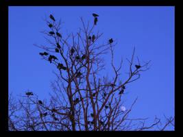 The Gathering by rakiman